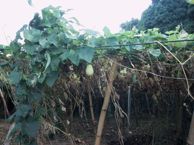 Plantes Utiles En Guadeloupe